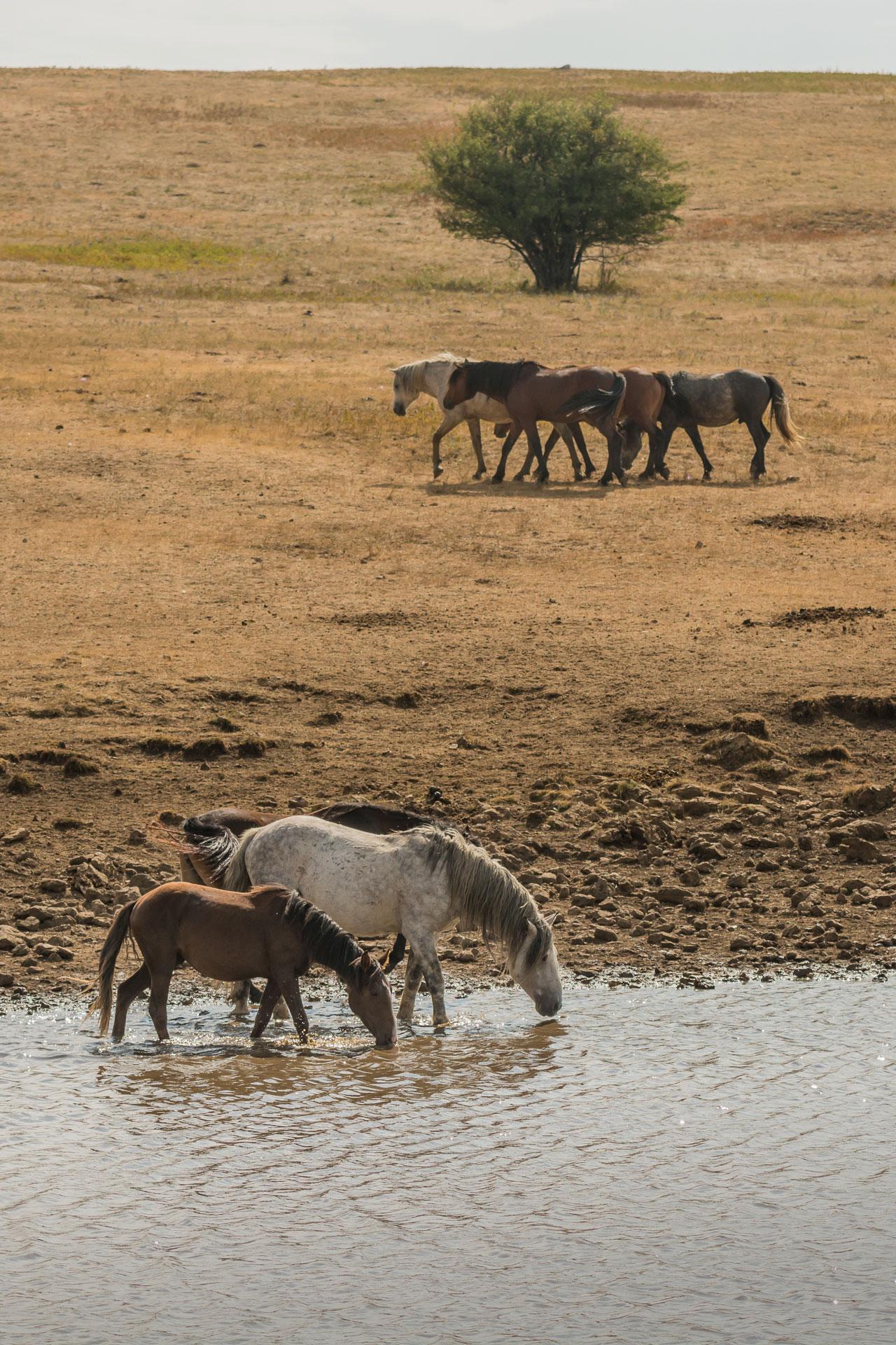39 mal bilder pferde  besten bilder von ausmalbilder